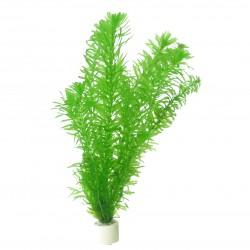 Egeria densa (bouquet)
