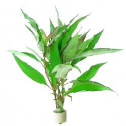 copy of Egeria densa (bouquet)