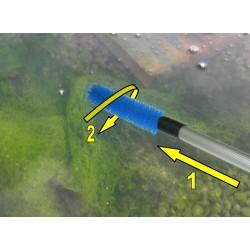 Brosse algue filamenteuse...